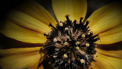 Photograph - Yellow Flower In Texass by Karen Musick