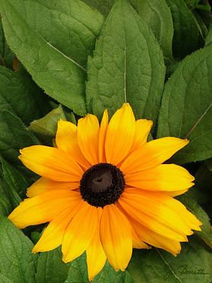 Photograph - Yellow Flower by Joe Bonita