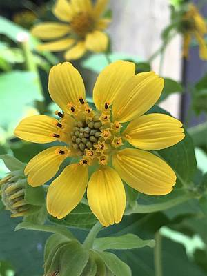 Photograph - Yellow Flower by Kay Gilley
