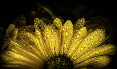 Photograph - Yellow Flower by Lilia D