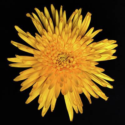 Yellow Flower Macro Art Print