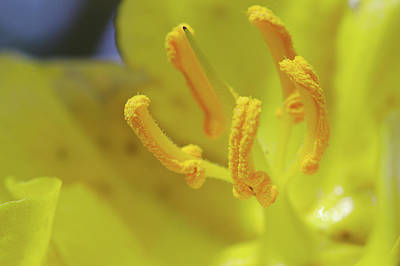 Photograph - Yellow Flower Macro by Paul Cowan