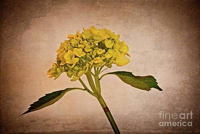 Photograph - Yellow Flower by Mary Machare