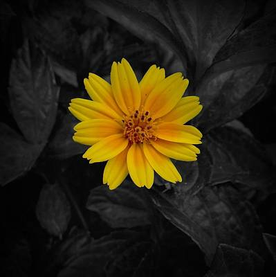 Photograph - Yellow Flower Pop Of Color by Patricia Strand