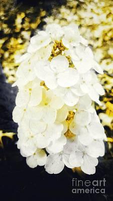 Photograph - Yellow Flower Puff by Rachel Hannah
