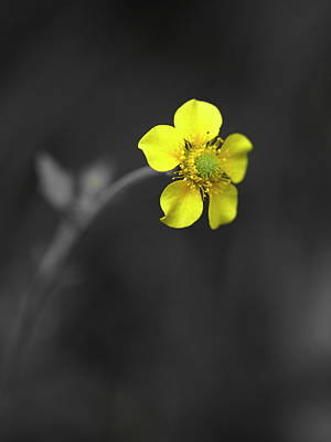 Photograph - Yellow Flower by Rachel Mirror