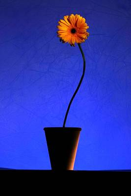 Art Print featuring the photograph Yellow Flower by Riana Van Staden
