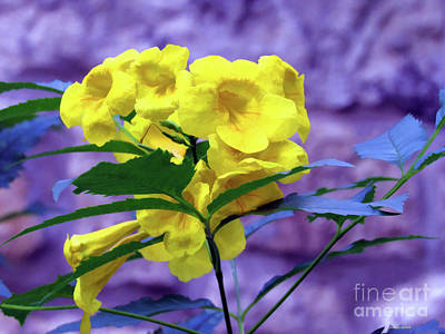 Photograph - Yellow Flower  by Roberta Byram