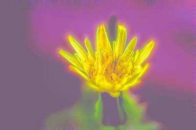 Photograph - Yellow Flower by Scott Carlton