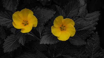 Photograph - Yellow Flower Twins Delray Beach Florida by Lawrence S Richardson Jr