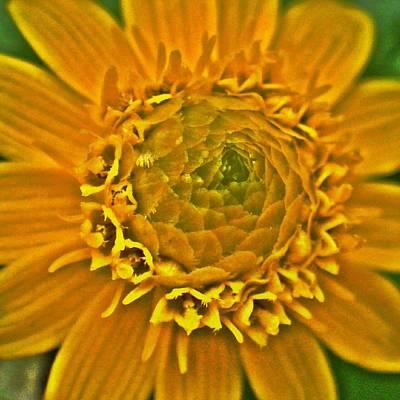 Digital Art - Yellow Flower2 by Kumiko Izumi