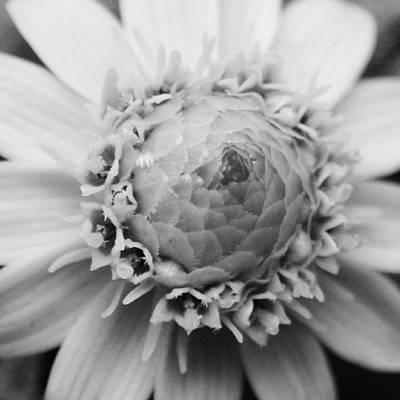 Flower Digital Art - Yellow Flower3 by Kumiko Izumi