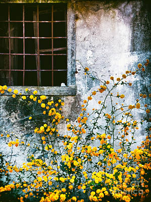 Print featuring the photograph Yellow Flowers And Window by Silvia Ganora