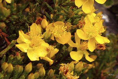 Photograph - Yellow Flowers by Bibi Rojas