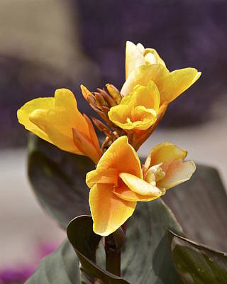 Photograph - Yellow Flowers by Carol  Bradley