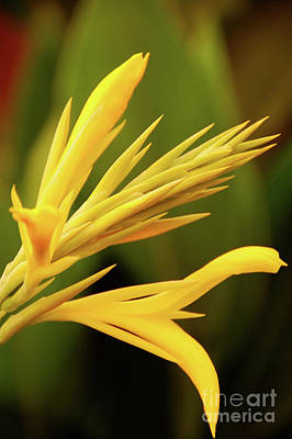 Photograph - Yellow Flowers by Charuhas Images