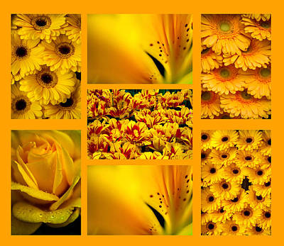 Photograph - Yellow Flowers Collection. Polyptych by Jenny Rainbow