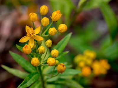 Photograph - Yellow Flowers by Derek Dean