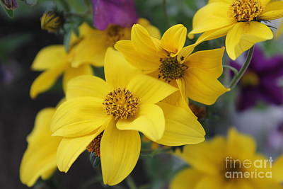 Photograph - Yellow Flowers by Donna L Munro