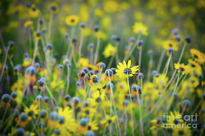 Art Print featuring the photograph Yellow Flowers by Kelly Wade