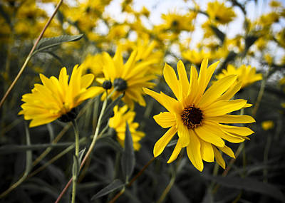 Photograph - Yellow Flowers by Nora Blansett