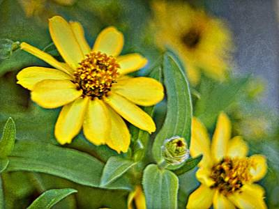 Photograph - Yellow Flowers Photoart_1a by Walter Herrit