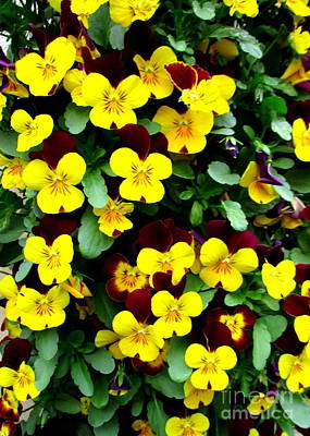 Photograph - Yellow Flowers by Randall Weidner