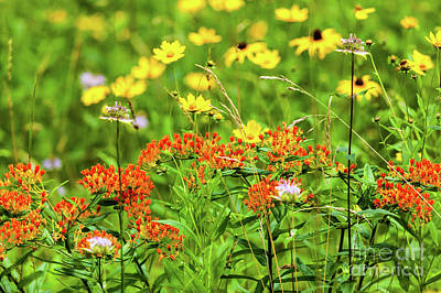 Photograph - Yellow Flowers Red Flowers In The Blue Ridge by Dan Carmichael