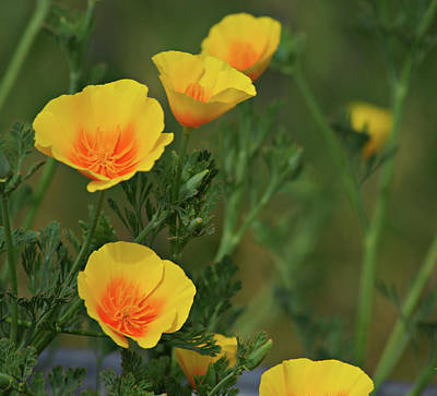Photograph - Yellow Flowers by Scott Sawyer