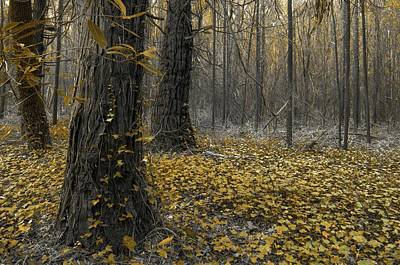 Photograph - Yellow Forest by Carlos Caetano