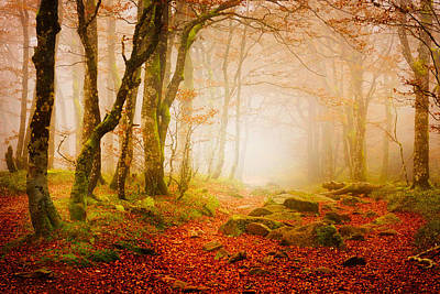 Photograph - Yellow Forest Mist by Philippe Sainte-Laudy