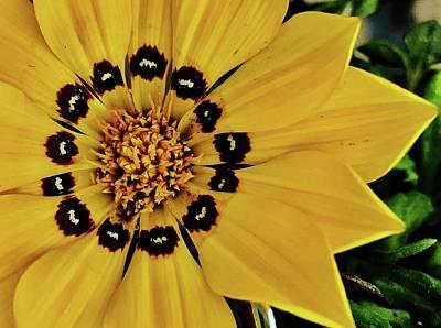 Photograph - Yellow Ganzia by Bruce Bley