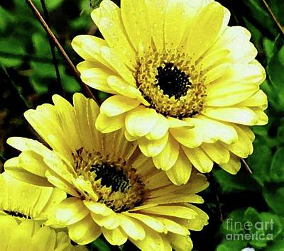 Photograph - Yellow Gerber Daisies by Hazel Holland
