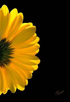 Photograph - Yellow Gerbera Daisy by Judi Quelland