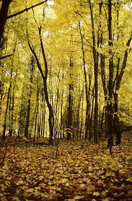Photograph - Yellow Glade by Don Youngclaus