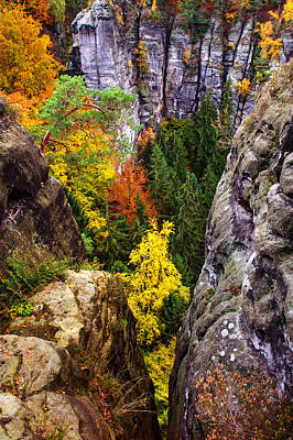 Photograph - Yellow Glimpses. Saxon Switzerland by Jenny Rainbow