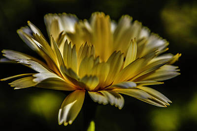 Photograph - Yellow Glow #h8 by Leif Sohlman