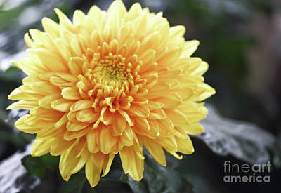 Photograph - Yellow Glow by Mary Haber