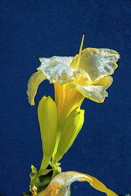 Photograph - Yellow Glue Blue #f9 by Leif Sohlman