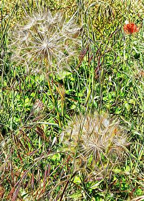 Photograph - Yellow Goats Beard 2 by Dorothy Berry-Lound