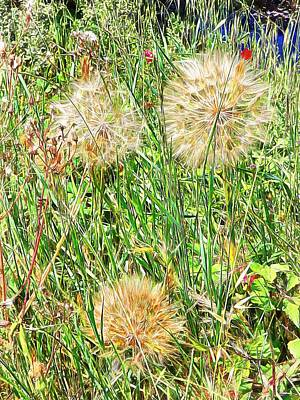 Photograph - Yellow Goats Beard 3 by Dorothy Berry-Lound