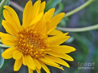 Photograph - Yellow Gold by Maria Urso