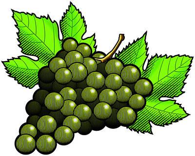 Bunch Of Grapes Digital Art - Green Grapes by Erasmo Hernandez