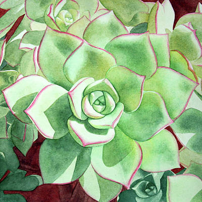 Yellow Green Succulent Aeonium Haworthii Original