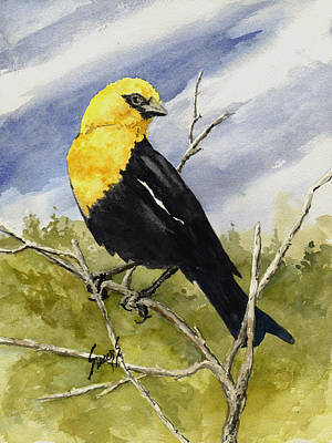 Yellow Beak Painting - Yellow-headed Blackbird by Sam Sidders