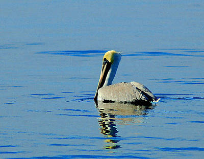 Painting - Yellow Headed Pelican by Michael Thomas