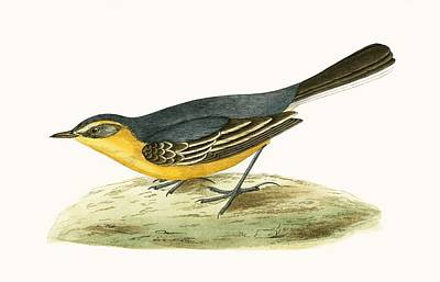 Citrine Painting - Yellow Headed Wagtail by English School