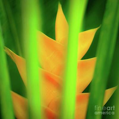 Photograph - Yellow Heliconia - Tropical Hawaii - 957 by D Davila