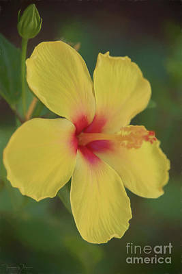 Photograph - Yellow Hibiscus Profile by Teresa Wilson
