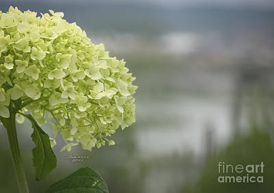 Photograph - Yellow Hydrangeas by Melissa Messick